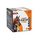 Snögg Animal Polster, orange, Selbstklebender Schaumstoffverband, Bandage für Pferde, Pflaster für Tiere, polsternd (14cm x 2m x 5mm)
