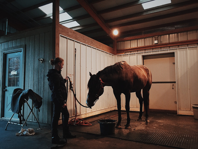 Putzen des Pferdes