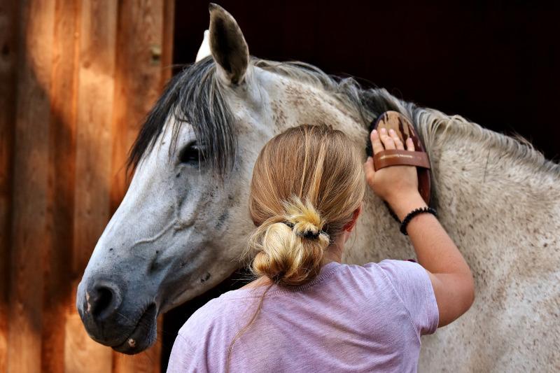 Frau putzt Pferd