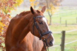 Ansicht eines Pferdes mit Gebissstange im Maul