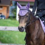 Pferd mit Fliegenohren