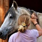 Pferde-Pflege mit Mähnenbürste