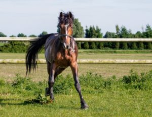 Pferd mit Hufglocken auf der Wiese