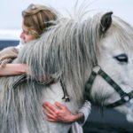 Das beste Mähnenspray für Pferde