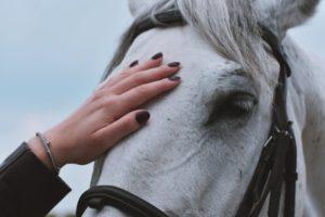 Knotenhalfter an einem Pferd