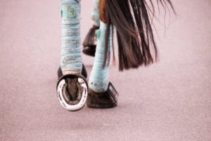 Pferdebeine mit Bandagen
