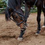 Pferd mit Stirnriemen