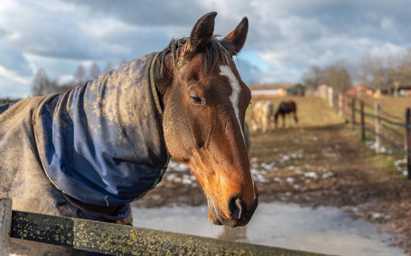 Halsteil einer Outdoor Pferdedecke