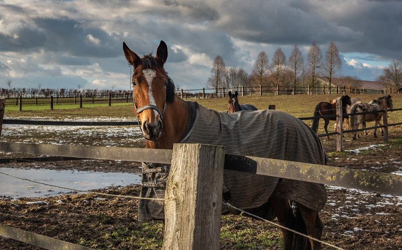 Pferdedecke Outdoor