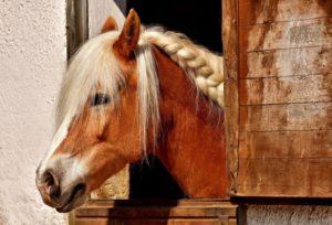 Stalltafel für Pferde
