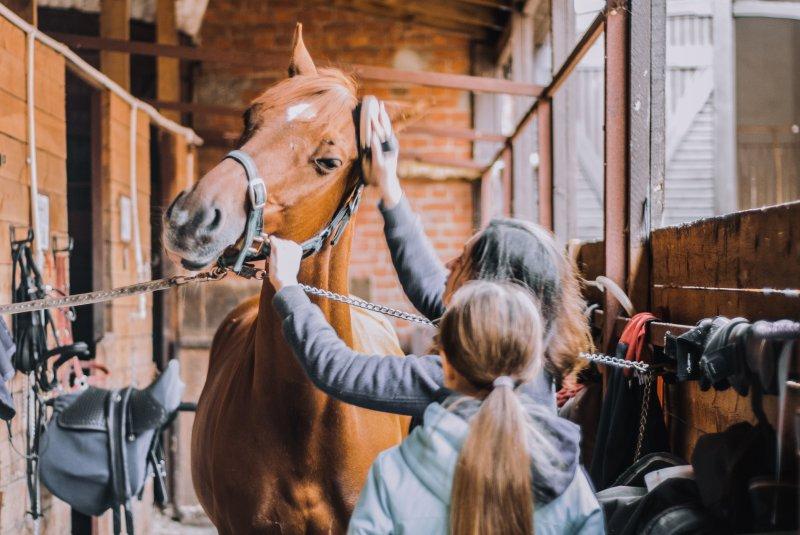 Jedes Pferd sollte einen eigenen Putzkoffer oder eine eigene Putztasche haben