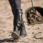 Bollensammler mit Pferdeäpfeln während dem Ausmisten auf einem Reitplatz