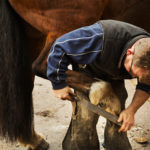 Mann Raspelt einem Pferd mit einer Hufraspel die Hufe.