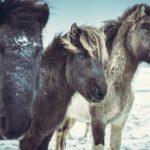 Pferdeschermaschine Test & Vergleich