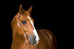 Pferd mit einer Westerntrense