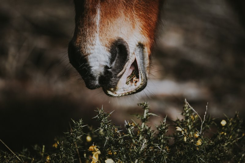 Pferd frisst Kräuter