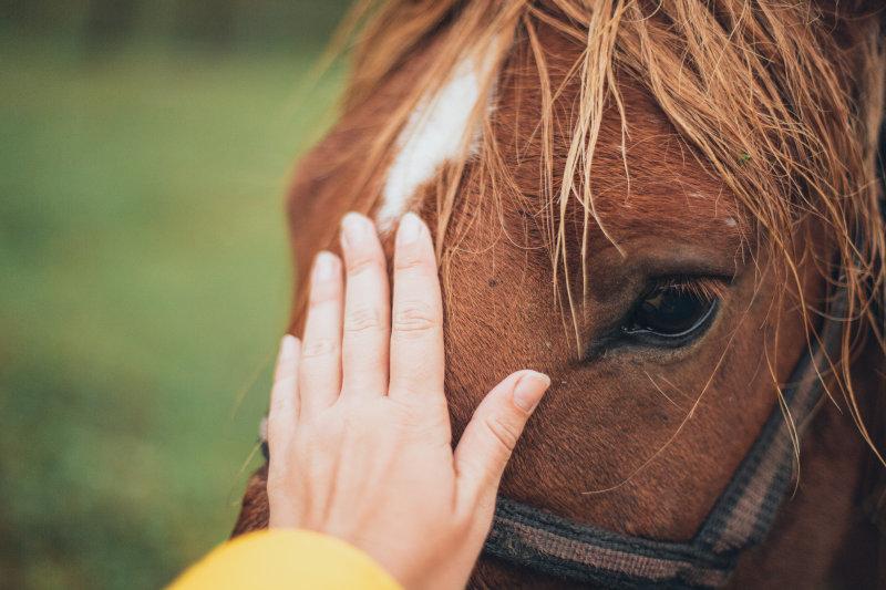Bindung zum Pferd durch Longe