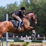 Pferd mit Springsattel beim Überwinden von Hindernissen