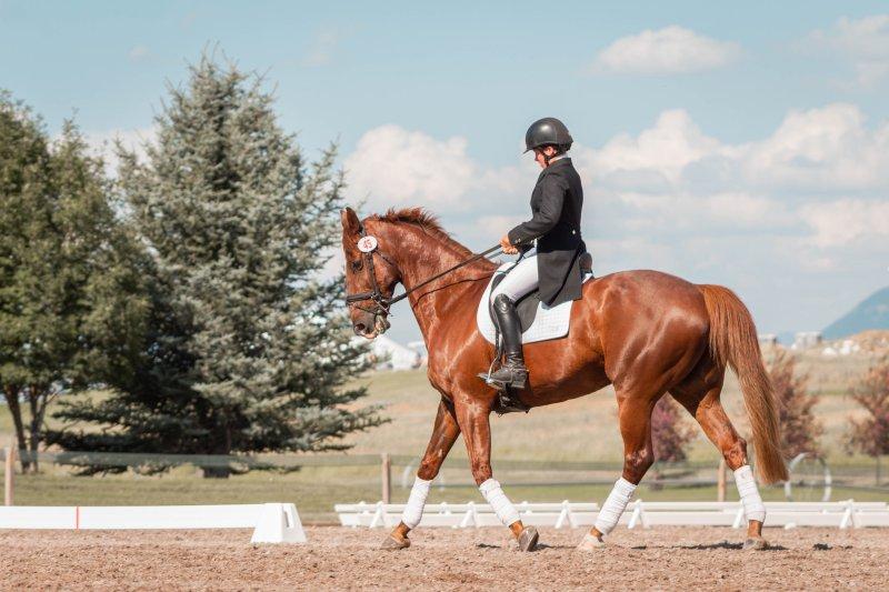 Reiter reitet sein Pferd auf dem Reitplatz