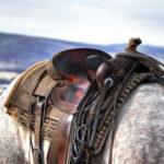 Westernsattel: Test, Vergleich und Kaufratgeber